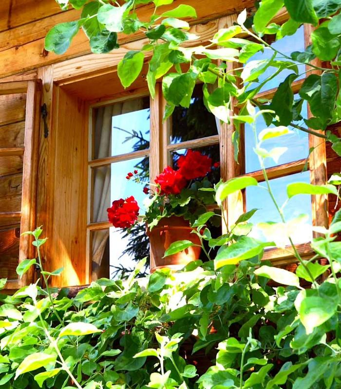Tree house outside 9